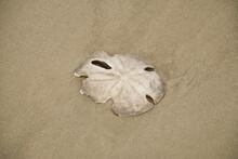 Close Up Of Broken White Sand ...