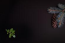 Holly Tree (Ilex Aquifolium) L...