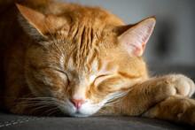 Cute Orange Tabby Cat Sleeping...