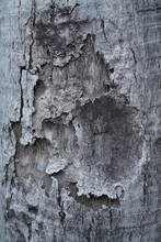 Old Tree Exotic Texture
