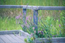散歩道に咲く草花