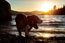 Lakeside Sunset Scene With Bas...