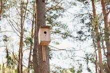 Bird House, Birdhouse On The Tree, Pine Forest, Pine Trunks