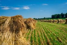 Amish / Mennonite Wheat / Barl...