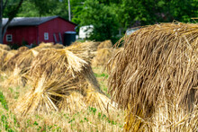 Red Barn In Front Of Amish / Mennonite Wheat / Barley Bails Of Straw Waiting To Be Thrashed.  Marco And Close Up Photographs.  Holmes County Ohio.  Mid Summer Harvest Of Winter Wheat