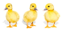 Collage Of Cute Yellow Ducklin...
