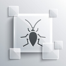 Grey Cockroach Icon Isolated On Grey Background. Square Glass Panels. Vector.