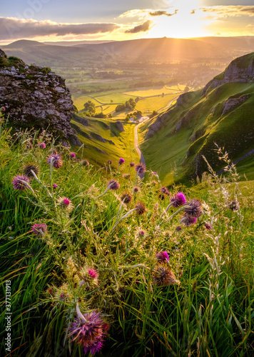 Fotografie, Obraz Flowering thistles above Winnats Pass in the Peak District, Derbyshire, England