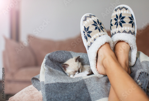 Slippers on women's legs and kitten