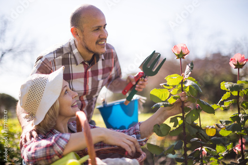 Fototapeta Family work in the garden. Woman and man grow roses