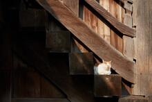 木の建物の階段で座っ...