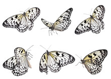 Set Of Beautiful Rice Paper Butterflies On White Background