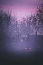 Tree Road At Evening Dusk