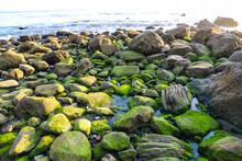 Rocks On The Beach Covered With Lush Green Algae And Waves Rolling In At El Matador Beach In Malibu California