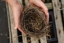 Hands Holding An Empty Bird Nest