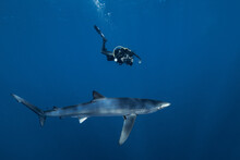 Scuba Diver And Blue Shark
