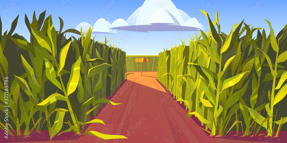 Fototapeta Road on cornfield with fork and wooden direction sign. Concept of choosing way and making decision. Vector cartoon landscape with tall corn stems and crossroad with pointers