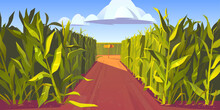 Road On Cornfield With Fork And Wooden Direction Sign. Concept Of Choosing Way And Making Decision. Vector Cartoon Landscape With Tall Corn Stems And Crossroad With Pointers