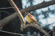 Bird On A Tree #2
