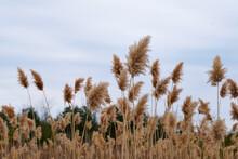 Dried Wild Grass In Field
