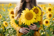 Young Woman Holds In Her Hands A Yellow Bouquet Of Sunflowers Among A Field Of Sunflowers. Fall And Autumn Time Concept.
