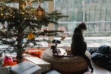 Cat Sitting Under Christmas Tree By Window