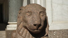 Head Of Lion