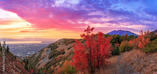 Fototapeta Colorful fall scene in the Wasatch Front, Utah, USA.