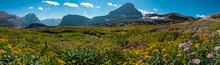Wildflowers Of Glacier National Park, Montana