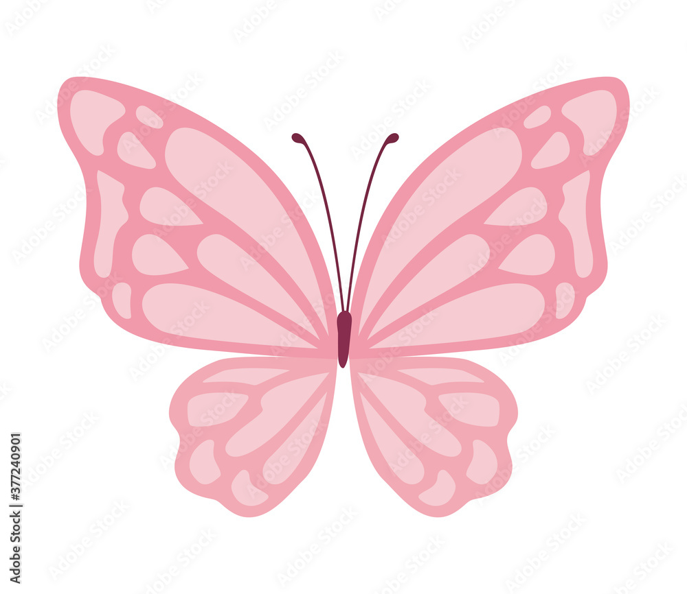 Fototapeta cute pink butterfly vector design