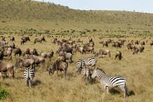 Landscape In The Masai Mara Of Kenya Africa