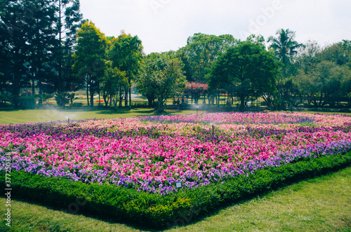 Photo Bogor, Indonesia - A view of the flower themed park Taman Bunga Nusantara in a cloudy afternoon with a view to a field of pink to purple flowers being watered by an automatic sprinkler