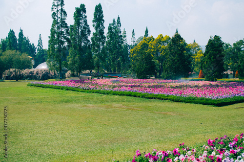 Bogor, Indonesia - A view of the flower themed park Taman Bunga Nusantara in a cloudy afternoon with a view to a field of pink to purple flowers from a distance Wallpaper Mural