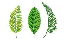 Green Tropical Leaves As Exoti...