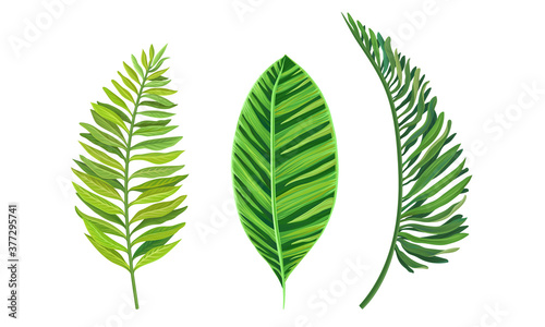 Foto Green Tropical Leaves as Exotic Flora Vector Set