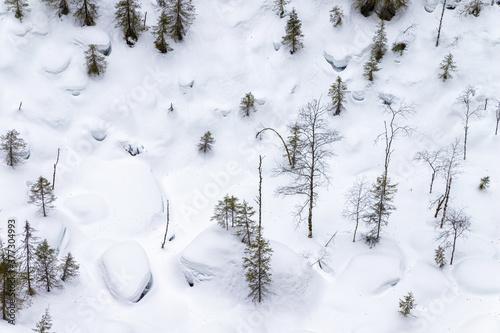 Fotografie, Obraz Rare trees at the bottom of a sinkhole