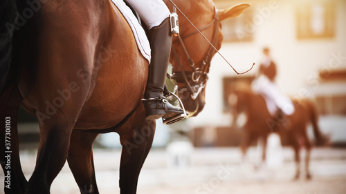 Fotografía On a Bay horse with a dark tail in the saddle sits a rider who holds a whip and a foot in the stirrup, and to meet them rides a rival in equestrian competitions