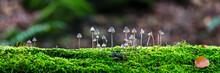 Pilze Auf Einem Baumstamm Mit Moos