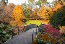 Beautifull Scenic Arched Wooden Bridge With Fall Leaves In Autumn Colors Park With Big Colorful Trees. Calming Nature Landscape View. Seasonal Background. Copy Space.