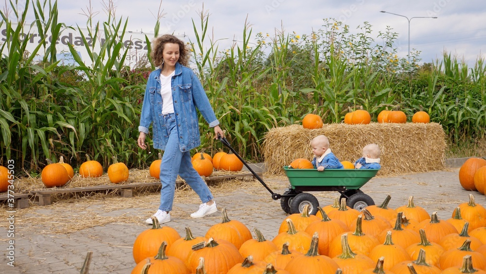 Fototapeta Young mom pulling her twin babies in a wagon in the pumpkin patch. Happy family concept