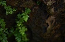 Close-up View Of Little Fern G...