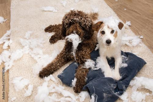 Photo Dog mischief
