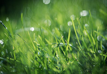Close Up Of Water Droplets On Blades Of Grass With Blurred Background