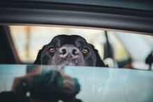 A Dog Is Sitting Inside A Car In A Desert Of California