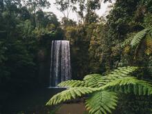 Millaa Millaa Falls Sourranded...