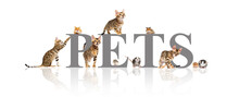 Group Of Pets Cats And Rodents On A White Background