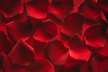 Rose Petals On A Red Background