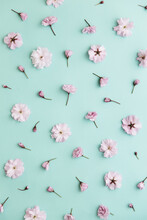 Cherry Blossom On A Turquoise Background