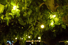 Light Bulbs Glowing With Warm Light Suspended From Tree Branches Among Green Leaves In Backyard Garden With Festive Decor, Closeup Celebratory Night Party Details, Nobody.