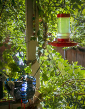 Action Camera On Octopus Tripod Positioned To Take Picture Of Hummingbird Feeder With Wisteria Branches And Foliage All Around